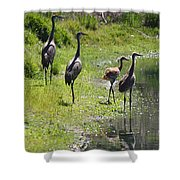 Sandhill Family By The Pond Shower Curtain