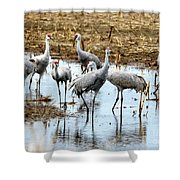 Sandhill Gang Shower Curtain