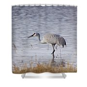 Sandhill On The Shore Shower Curtain