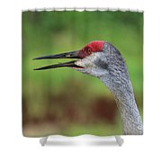 Sandhill Song Shower Curtain