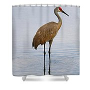 Sandhill Standing In Peaceful Pond Shower Curtain