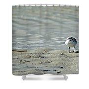 Sandpiper Shower Curtain