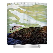 Sandpiper At Ponce Inlet Shower Curtain