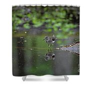 Sandpiper In The Smokies Shower Curtain