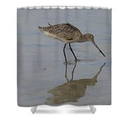 Marbled Godwit 1 Shower Curtain