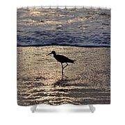 Sandpiper On A Golden Beach Shower Curtain