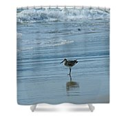 Sandpiper On The Beach Shower Curtain