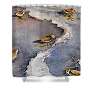 Sandpiper Seashore Shower Curtain