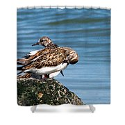 Sandpipers 2 Shower Curtain