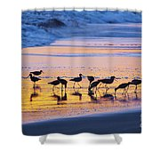 Sandpipers In A Golden Pool Of Light Shower Curtain