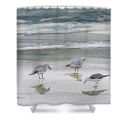 Sandpipers Shower Curtain by Julianne Felton
