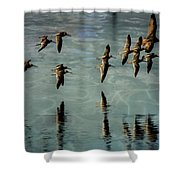 Sandpipers Shore Bound Shower Curtain