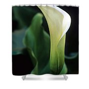 Sandra's Lilly IIi Shower Curtain