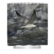 Sandwhich Tern Flies Over Stormy Waves Shower Curtain