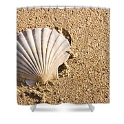 Sandy Shell Shower Curtain by Jorgo Photography - Wall Art Gallery