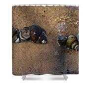 Sandy Shells Shower Curtain