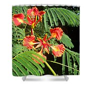 Sanguine Serenity IIi Shower Curtain