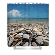 Sanibel Island Sea Shell Fort Myers Florida Broken Shells Shower Curtain