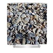 Sanibel Island Seashells I Shower Curtain