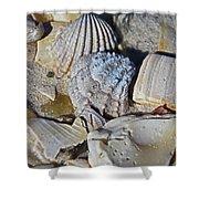 Sanibel Island Seashells Iv Shower Curtain