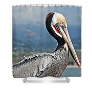 Santa Barbara Brown Pelican Shower Curtain
