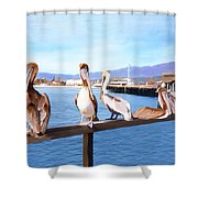 Santa Barbara Pelicans Shower Curtain