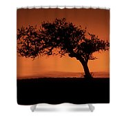 Santa Ynez Oak Tree Shower Curtain