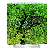 Sapes In Nature Shower Curtain
