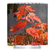 Sapling By The Pond Shower Curtain