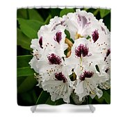 Sappho Rhododendron Shower Curtain