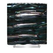 Sardine Shower Curtain
