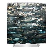 Sardines 1 Shower Curtain