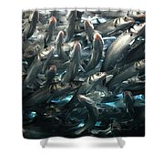 Sardines 2 Shower Curtain