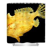 Sargassum Anglerfish Shower Curtain