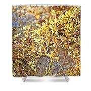 Sargassum Seaweed Shower Curtain