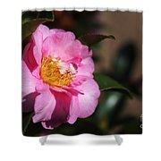 Sasanqua Camellia Shower Curtain