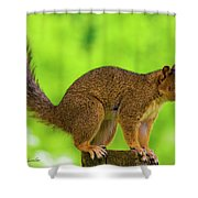 Sass Shower Curtain