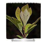Sassafras Leaves Shower Curtain