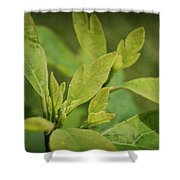 Sassafras Tree Shower Curtain
