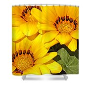 Satin Yellow Florals Shower Curtain
