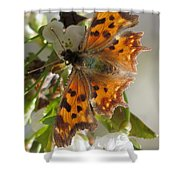 Satyr Comma Shower Curtain