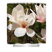 Saucer Magnolia Shower Curtain