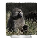 Savannah Olive Baboon  Shower Curtain