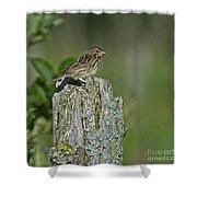 Savannah Sparrow.. Shower Curtain
