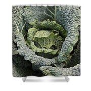 Savoy Cabbage In The Vegetable Garden Shower Curtain