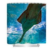Sawfish Shower Curtain