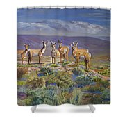 Say Cheese Antelope Shower Curtain