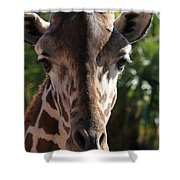 Say Cheese Card Shower Curtain