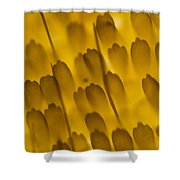 Scales Of A Butterfly Wing, Lm Shower Curtain