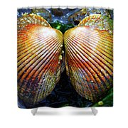 Scallop - Close Up Shower Curtain